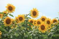 夏のお花見♪ - 君の瞳に恋してる♪