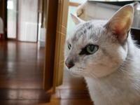 モン様、道場散歩を楽しむ - ご機嫌元氣 猫の森公式ブログ