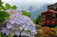 丹後由良駅のアジサイ - 今日も丹後鉄道