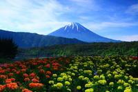 29年6月の富士(27)西湖の富士 - 富士への散歩道 ~撮影記~