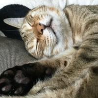 プー 眠い💤 - 「にゃん」の針しごと