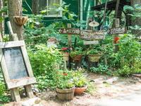 6月も最終日・・カンタベリーのガーデンも初夏の花に入れ替え中! - 十勝・中札内村「森の中の日記」~café&宿カンタベリー~