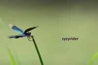 トンボの見張り - ジージーライダーの自然彩彩