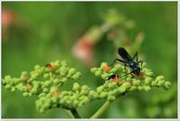昆虫たち - ハチミツの海を渡る風の音