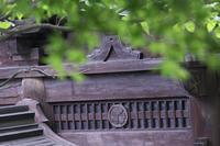乗蓮寺の福寿観音と、散歩道での植物いろいろ、 - 子猫の迷い道Ⅱ