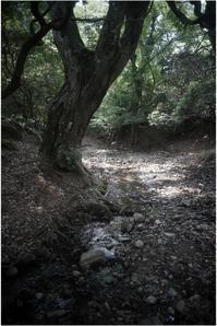 1824 名玉極楽(2017年6月1日ズマロン35㎜F2.4で奈良公園散策)2 - レンズ千夜一夜