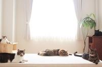 7月の(仮)TOP画像  - きょうだい猫と仲良し暮らし