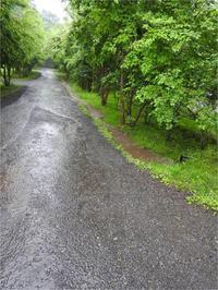 【速報】強めの雨が降っています-追記:雨止みました- - 北軽井沢スウィートグラス