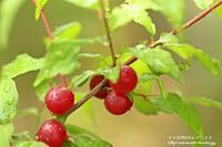 地域のコミセンの庭をマクロレンズで(^^♪ - 自然のキャンバス