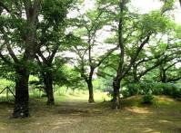 雨上がりの公園 - Zen おりおりの記