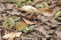 鳥と蝶 - 何でも写真館