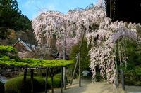 京都の桜2017 桜の善峯寺 - 花景色-K.W.C. PhotoBlog