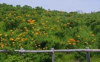 小清水原生花園と斜里の丘カフェ(追記あり) - 北緯44度の雑記帳
