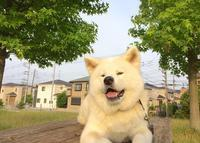 One▽・ェ・▽derful day♪ 7月 - 秋田犬「大和と飛鳥丸」の日々Ⅱ