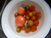 トマトの季節 - ご機嫌元氣 猫の森公式ブログ
