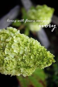 天気予報 -  Flower and cafe 花空間 ivory (アイボリー)