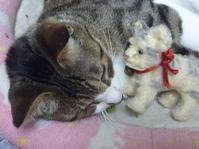 本物 VS 偽物 Cat どっちがかわいい? Part.3 - ヴィンテージ・シュタイフと仲間たち