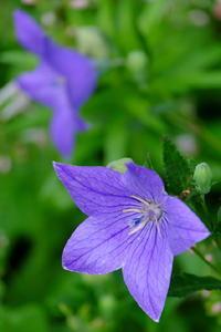 雨の合間のしっとり花々 - 錦眼鏡