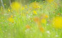 草むら。。。 - ainosatoブログ02