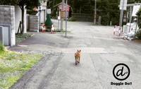 キツネも散歩する円山界隈.. - Doggie Do!! / good dog and hello cat !!