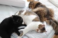 目覚めたときの猫たち - きょうだい猫と仲良し暮らし