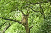 秋ヶ瀬公園のフクロウ Ural owl - 素人写人 雑草フォト爺のブログ
