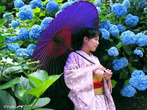 四季の花と - MAKOTO は桜いろ