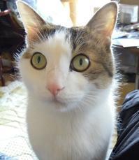 僕の病気 - ドン・小太郎・コルリオーネ、愛と猫缶の日々