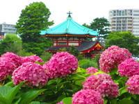 上野 湯島 - 東京いけばな日記 花と暮らしと生活と