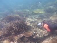 美しい光景をじっくりとカメラで ~糸満近海シュノーケリング~ - 沖縄本島最南端・糸満の水中世界をご案内!「海の遊び処 なかゆくい」