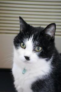 ミンちゃんの日 - ご機嫌元氣 猫の森公式ブログ