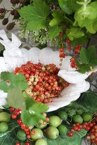 房すぐり  red currant -  La Fleur
