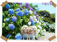 2017年6月17日 下田公園@伊豆旅行 - 週末は、愛犬モモと永吉とお出かけ!Kimi's Eye