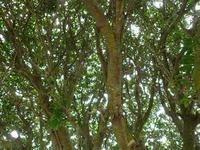 森林浴 - NATURALLY