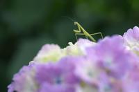 花に立つ - Today's one photograph