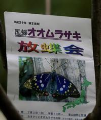 オオムラサキ - 菜奈ちゃんコーナー