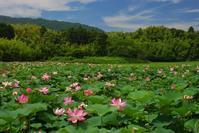 鴨川・古代蓮の里 - 小さな風景への想い