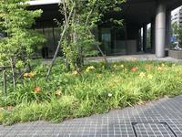 税務研究会名古屋会場資産税事例検討会、そしてキスゲ - 資産税の税理士ノート