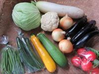 今週の野菜セット 6月5週目~7月2日 - まるみど農園のあれこれ日記