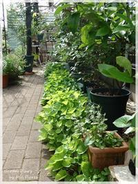 Butterflies' visit. - Garden Diary
