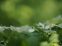 森時間2 - 心の色~光生写真館~