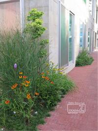 植物的生活822 - Atelier Botanique COCA-Z