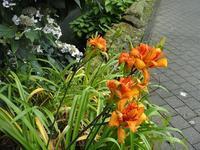 無数の蝶が舞う・菊花山 その4 - 季節(いま)を求めて