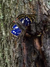 クヌギ林の昆虫たち - この道は風なり