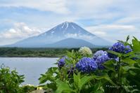 富士山といっしょ! **紫陽花** - Always Together!