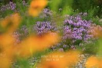 タイムの花* のころ PART2 - FUNKY'S BLUE SKY