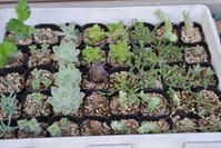 ビワその後と、初夏の庭、いろいろ - HANA 花♪日記