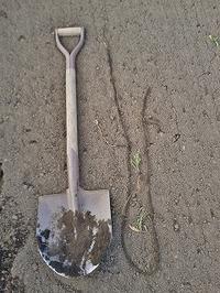 スギナの根っこ掘り - 空ヤ畑ノコトバカリ