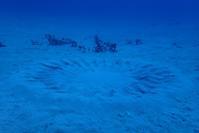 今日も大島海峡ダイブ! 奄美南部 - 奄美大島 ダイビングライフ    ☆アクアダイブコホロ☆