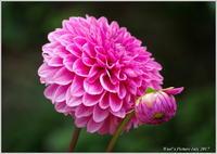 植物園の花と実 - 野鳥の素顔 <野鳥と・・・他、日々の出来事>